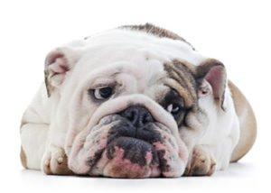 404bulldog